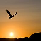 Eagle in sunset by Per E. Gunnarsen