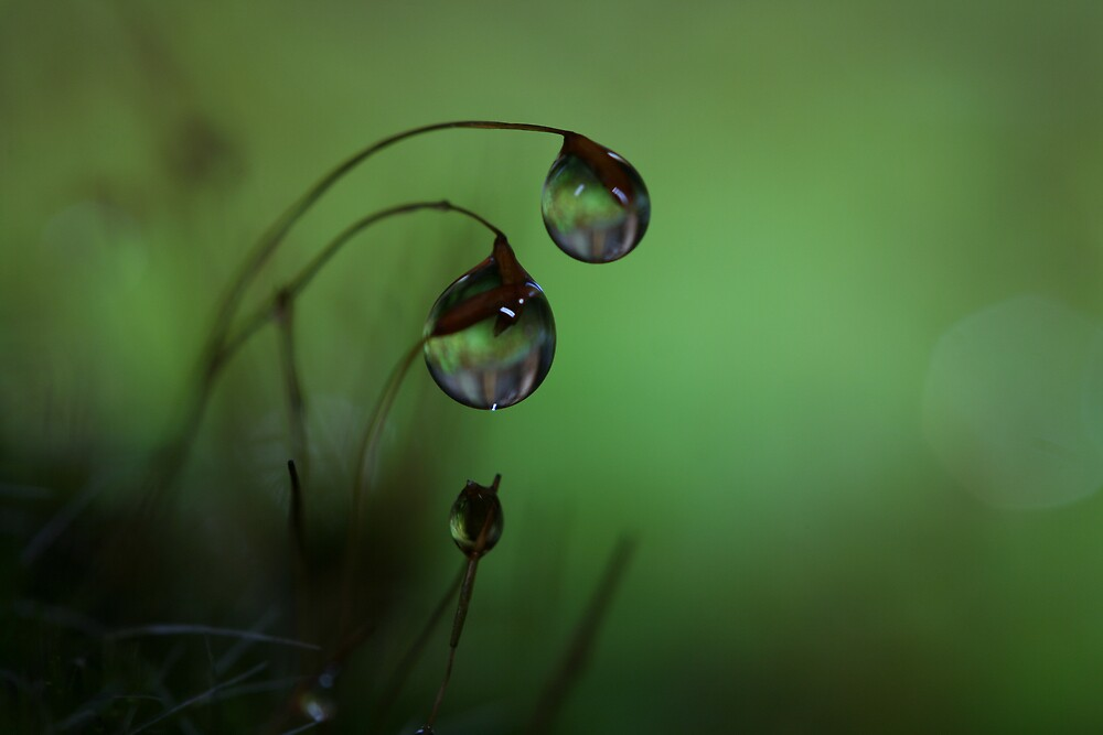 Dusk by Sharon Johnstone