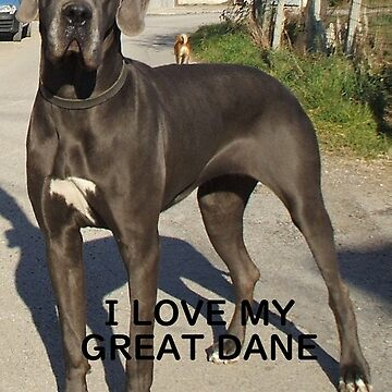 black great dane love with picture by marasdaughter