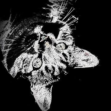Upsidedown cat by Hristova