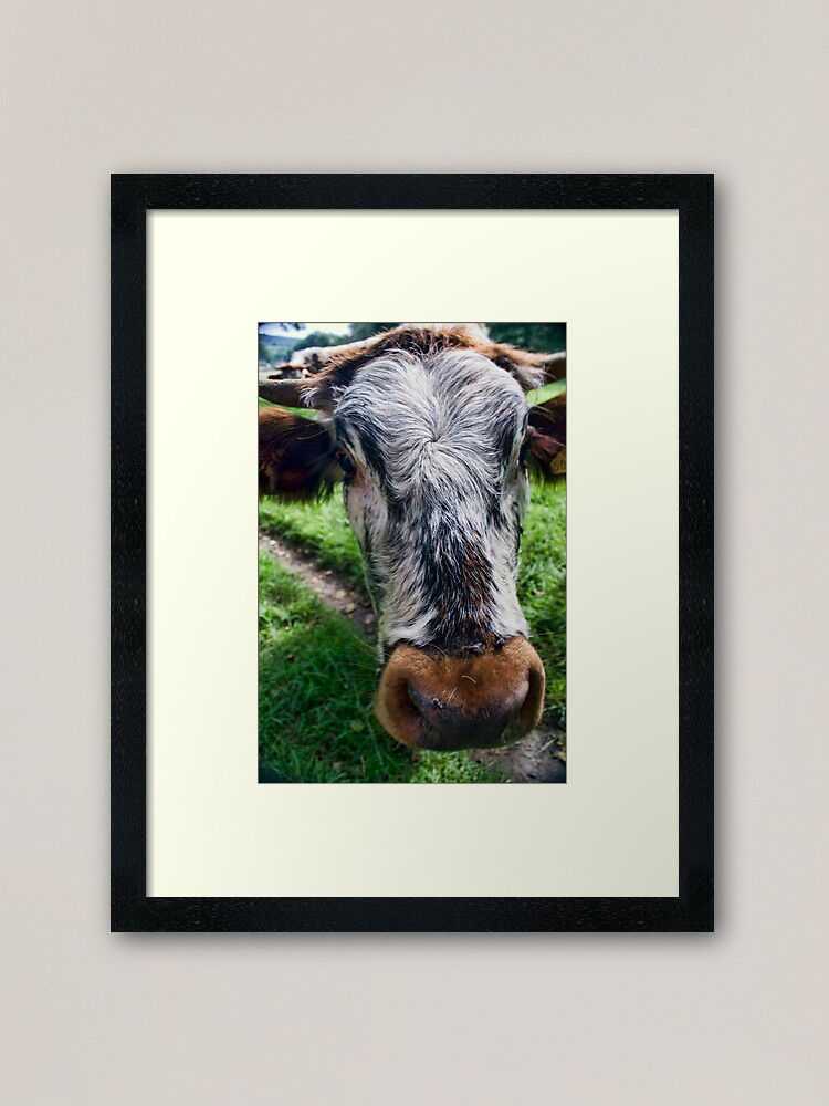 Alternate view of Nosey Cow Framed Art Print