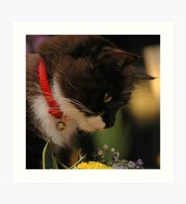 Tussi sniffing flowers Art Print