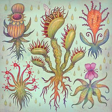 Carnivorous plants by vladimirsart