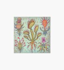 Carnivorous plants Art Board Print