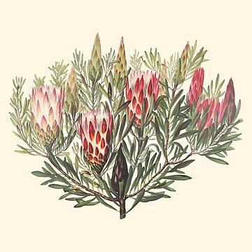 Rosa Honig-Blumen-Aquarell Boho tropische Anlagen von Saburkitty