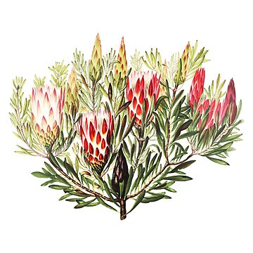 Helles rosa Honig-Blumen-Aquarell Sunkissed Boho tropische Anlage von Saburkitty