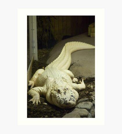 Gator White Art Print