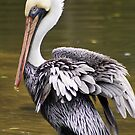 Ruffled Feathers by Donna Adamski