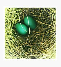 Robins Nest Photographic Print