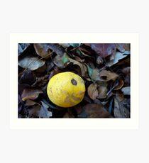2017 Limone Art Print
