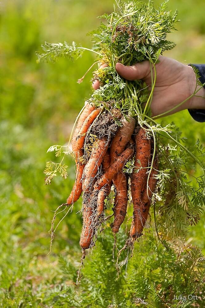 Picking Carrots by Julia Ott