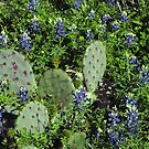 Bluebonnets Among the Prickly Pear Cactus by Susan Russell