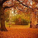 Autumn leaves cover the ground at La Trobe Uni by Elana Bailey