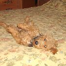 Do you mind, I am trying to sleep here! by Tucker The Dog