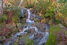 Eurobin Creek by mspfoto