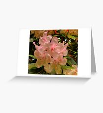 Hint of Pink (Rhododendron) Greeting Card