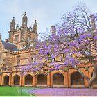 Spring Colour at Sydney Uni by Michael Matthews