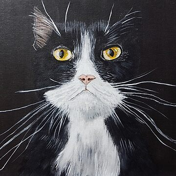 Cute Black Cat-Long Whiskers by broadmeadow