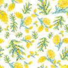 Australian wattle flowering by Clare Kelly