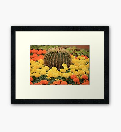 In Colorful Company Framed Print