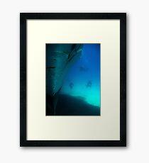 Diving the Wreck Framed Print