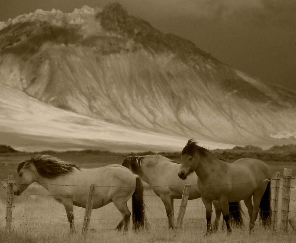 Snaefellsnes Horses by tonyconnelly