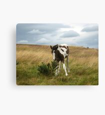 Little Ted Canvas Print