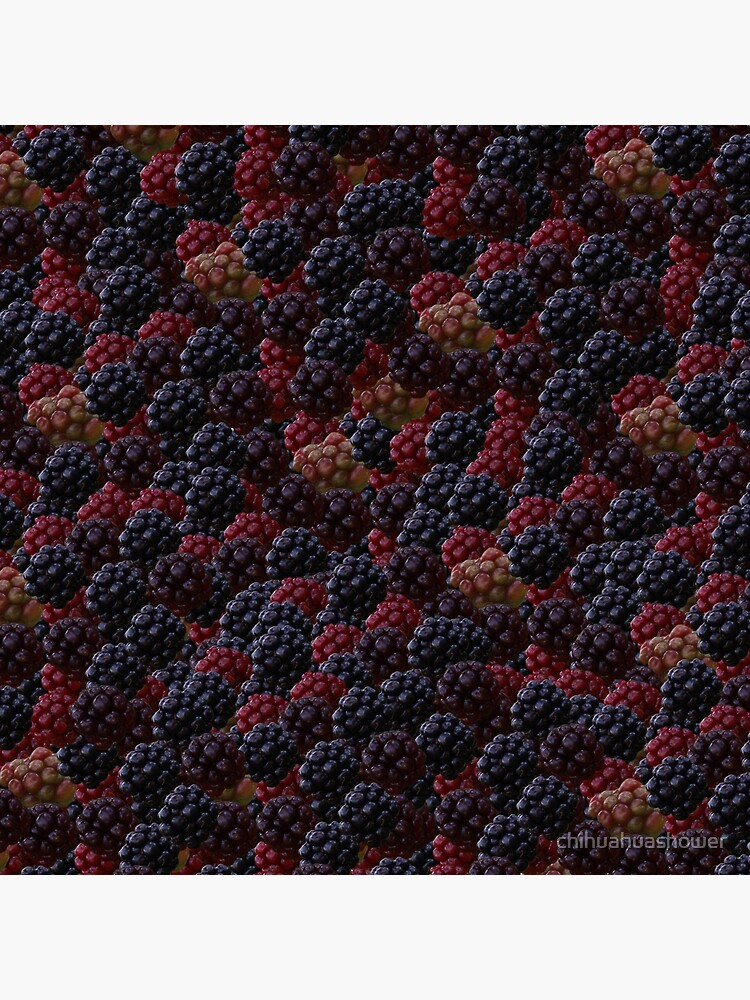 Blackberries by chihuahuashower