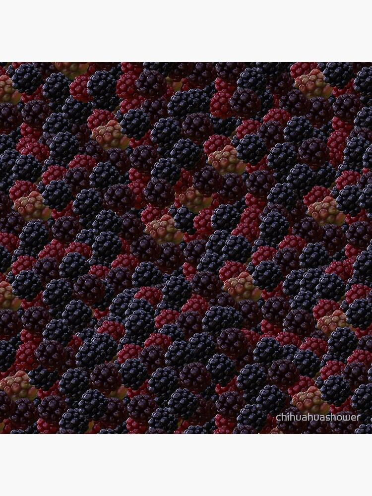 Blackberries by chihuahuashower