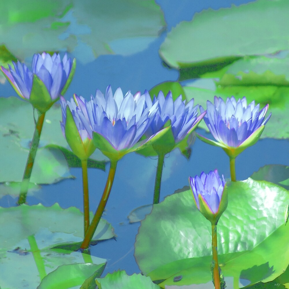 Water Colored Lilies by Holly Kempe