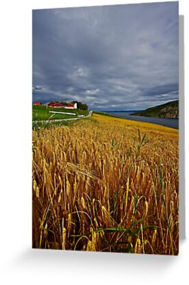 Views: 10015.The DeeZ 5Cs Award Banner. Verrasundet Sor-Trondelag . Norway. Brown Sugar Story . This image Has Been S O L D .  Brilliant work by © Andrzej Goszcz,M.D. Ph.D