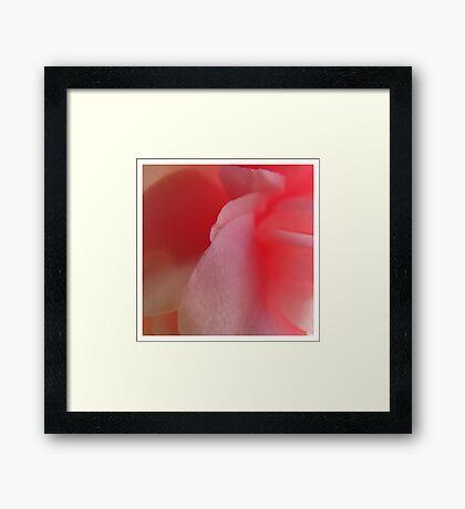 Camelia #1 Framed Print