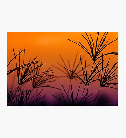 I Love a Sunburnt Country Photographic Print