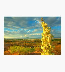 Mesilla Valley Blossoms Photographic Print