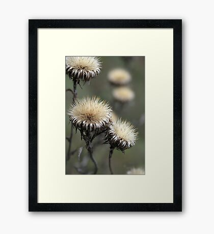 Trio ( from wild flowers collection)  Framed Print