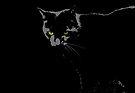 Black Cat 1 by Etakeh