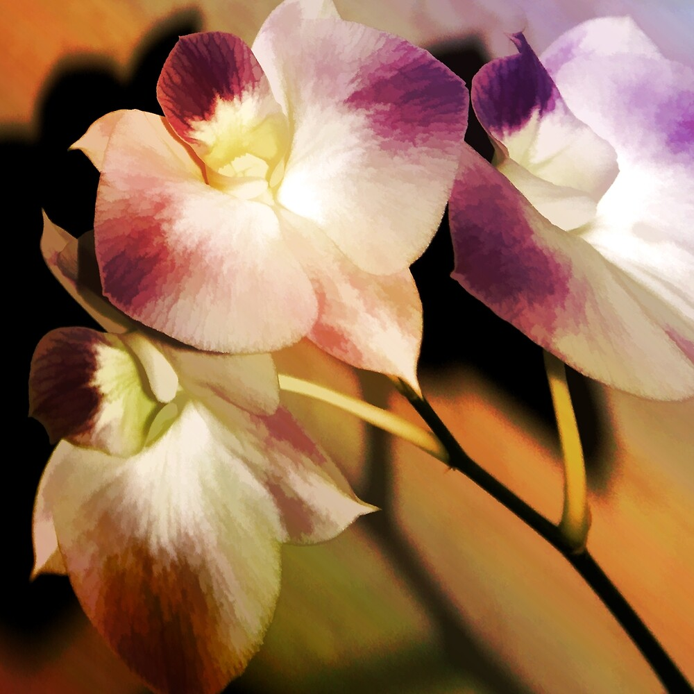 Hot Orchid Nights by Holly Kempe