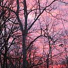Sunset by Judy Seltenright