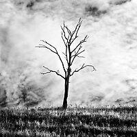 Solitude by Nicole Orlowski