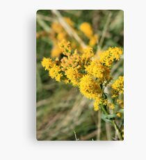 Stout Goldenrod Canvas Print
