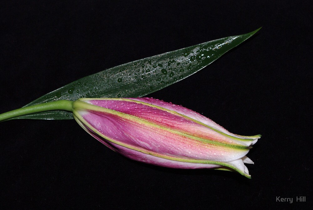 Dewdrop lily by Kerry  Hill