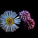 Tiny Wild Flowers On Black by Lynda Anne Williams