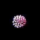 Solo Bloom On Black by Lynda Anne Williams