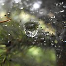 Underneath A Soaked Spider Web by Tracy Wazny