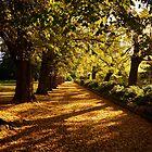 The Garden Path by D-GaP