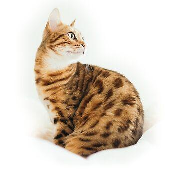 Cute Bengal Cat by tamagothings