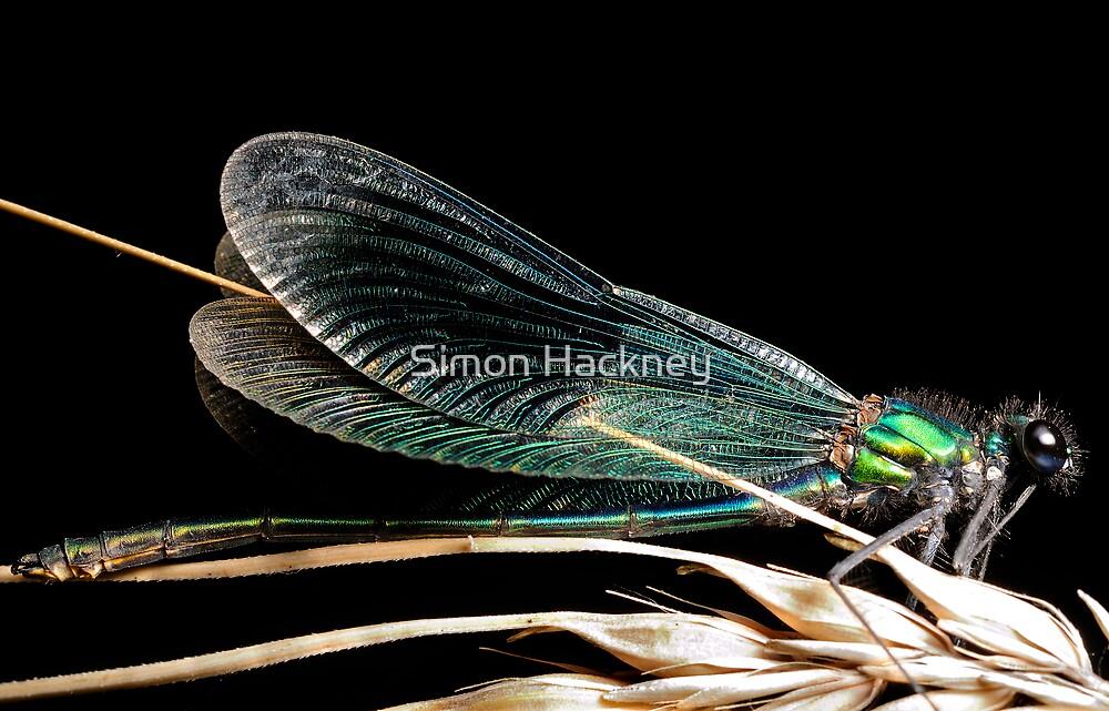 Damsel fly, Banded Demoiselle by Simon Hackney