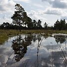 Reflection in the moor by lenses-and-ink