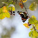 Butterfly in the tree by lenses-and-ink