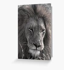 Lion Man - Photographic Nature Print Greeting Card